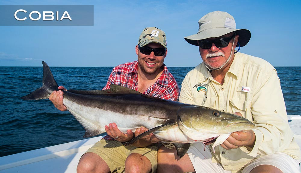 Cobia myrtle beach sc fishing charters for Fishing myrtle beach sc